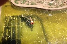 Nguyên nhân và Cách xử lý nước hồ bơi bị vàng