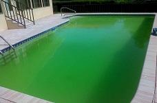 Xử lý nước hồ bơi khi xuất hiện màu xanh bất thường